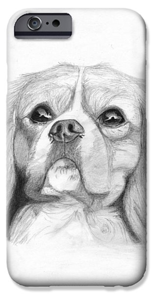Pet iPhone Cases - Cavalier King Charles Spaniel 2 iPhone Case by David Smith