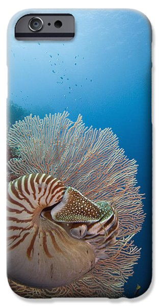 Chambered Nautilus iPhone Case by Dave Fleetham - Printscapes