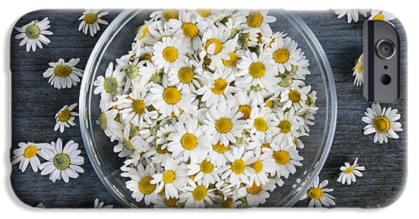 Plant iPhone Cases - Chamomile flowers in bowl iPhone Case by Elena Elisseeva