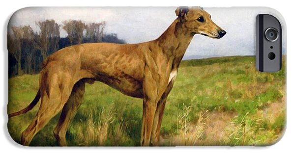 Animal Drawings iPhone Cases - Champion Greyhound Dee Flint iPhone Case by Celestial Images
