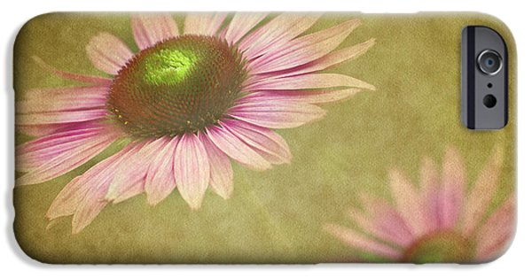 Cone Flower iPhone Cases - Chase Me iPhone Case by Rebecca Cozart