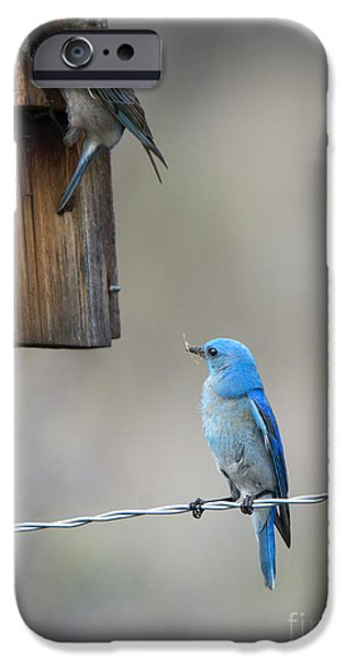 Bluebird iPhone Cases - Checking the Nest iPhone Case by Mike Dawson