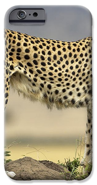 Cheetah Acinonyx Jubatus On Termite iPhone Case by Winfried Wisniewski