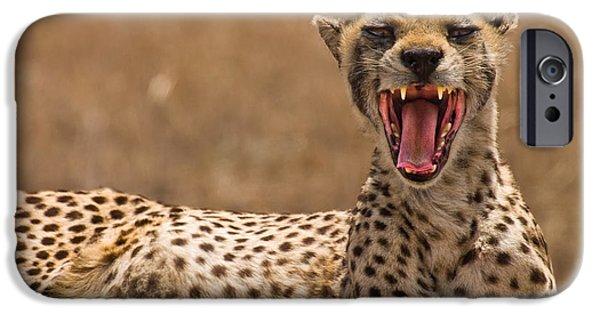 Ngorongoro Crater iPhone Cases - Cheetah iPhone Case by Adam Romanowicz