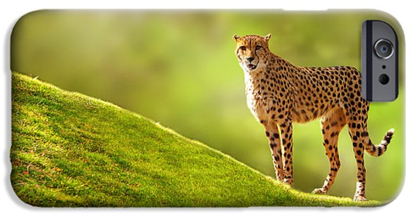 Large Mammals iPhone Cases - Cheetah on a Hill iPhone Case by Susan  Schmitz