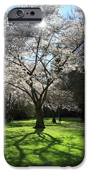Cherry blossom sunshine iPhone Case by Pierre Leclerc Photography