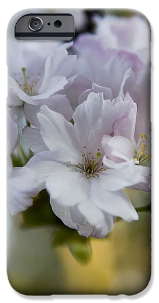 Cherry blossoms iPhone Case by Frank Tschakert