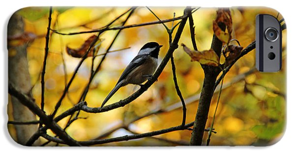 Wild Animals iPhone Cases - Chickadee In Autumn iPhone Case by Debbie Oppermann