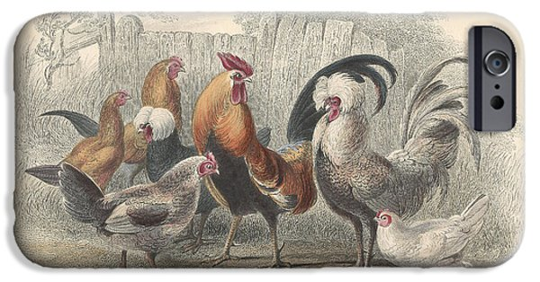 Antiques Drawings iPhone Cases - Chickens iPhone Case by Oliver Goldsmith