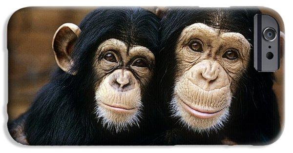 Bonding iPhone Cases - Chimpanzees iPhone Case by Tony Craddock