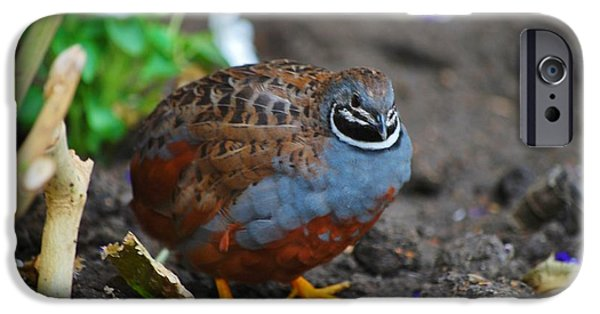 Business iPhone Cases - Chinese Quail 2 iPhone Case by Todd and candice Dailey