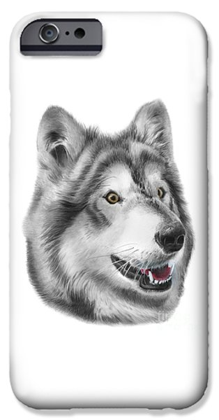 Husky Drawings iPhone Cases - Chinook iPhone Case by Peter Piatt