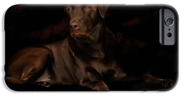 Christine Till iPhone Cases - Chocolate Lab Dog iPhone Case by Christine Till