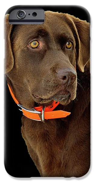 Chocolate Lab iPhone Cases - Chocolate Lab iPhone Case by William Jobes