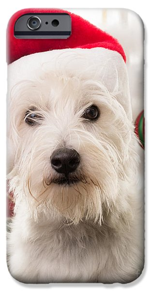 Puppies iPhone Cases - Christmas Elf Dog iPhone Case by Edward Fielding