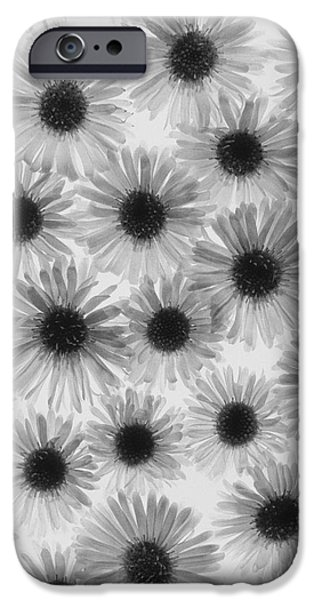 Chrysanthemum iPhone Cases - Chrysanthemum Flowers iPhone Case by Graeme Harris