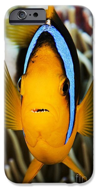 Amphiprion Clarkii iPhone Cases - Clarks Anemonefish Face iPhone Case by Dave Fleetham - Printscapes