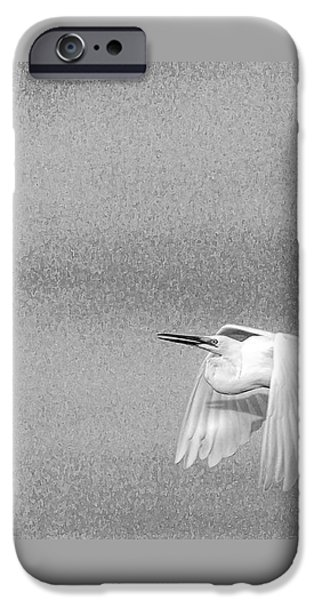 Sea Birds Photographs iPhone Cases - Clear For Take Off iPhone Case by Marvin Spates