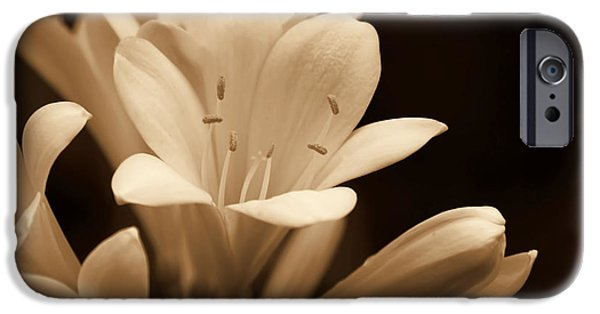 Sepia Flowers iPhone Cases - Clivia Floral in Sepia Monochrome iPhone Case by Jennie Marie Schell