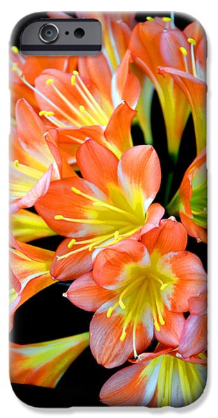 Flower Of Life iPhone Cases - Clivia miniata. Orange flowered form. iPhone Case by Andy Za