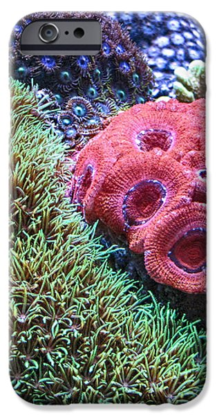 Close Quarters iPhone Case by Wendy J St Christopher
