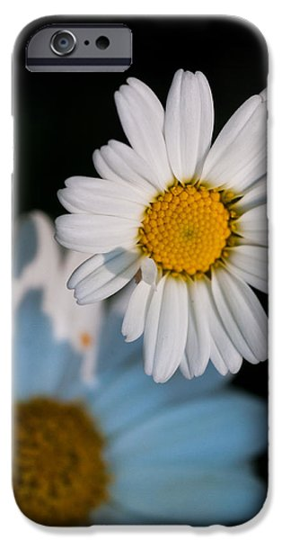 Simple Beauty In Colors iPhone Cases - Close up daisy iPhone Case by Nathan Wright