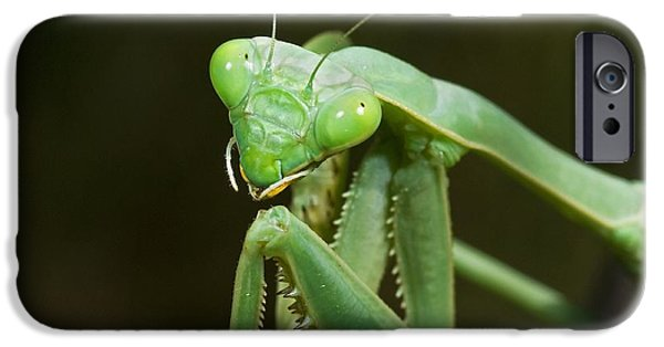 Mantodea iPhone Cases - Close Up Of A Praying Mantis iPhone Case by Jack Goldfarb