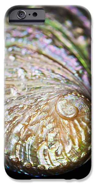 Abalones iPhone Cases - Close-up of Abalone Shell iPhone Case by Bill Brennan - Printscapes