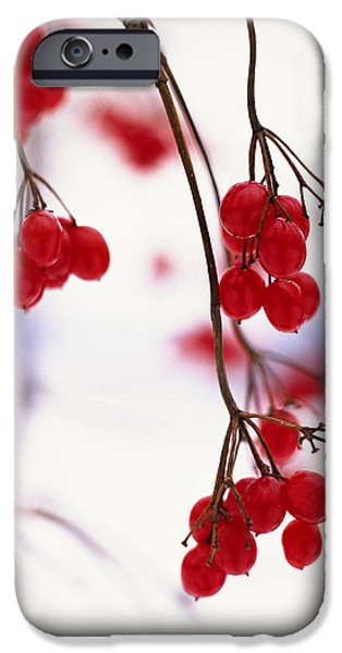 Berry iPhone Cases - Close-up Of Branches With Red Berries iPhone Case by Gillham Studios