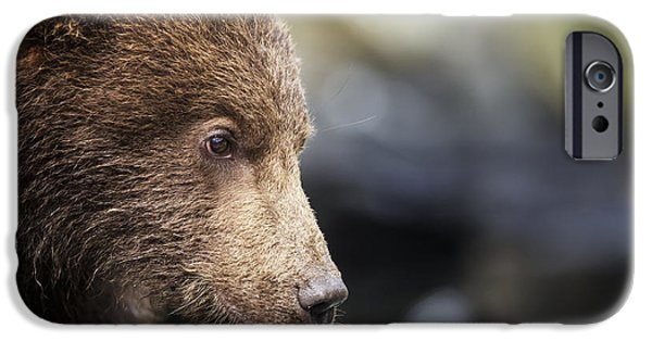 Close Focus Nature Scene iPhone Cases - Close-up Portrait Of Coastal Brown Bear iPhone Case by Paul Souders
