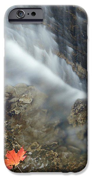 Closeup Maple Leaf And Decew Falls, St iPhone Case by Darwin Wiggett