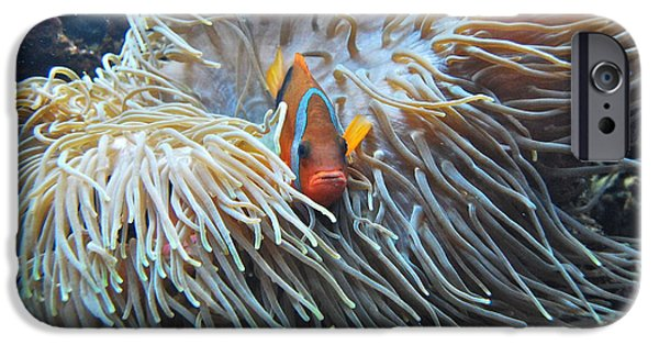 Clown Fish Photographs iPhone Cases - Clown Fish iPhone Case by Michael Peychich