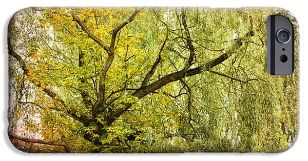 Nature Abstract iPhone Cases - Co iPhone Case by SK Pfphotography