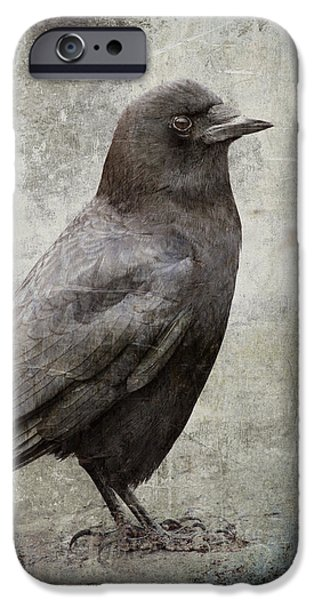 Corvid iPhone Cases - Coastal Crow iPhone Case by Carol Leigh