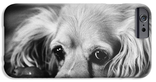 Animal Portraiture iPhone Cases - Cocker Spaniel With Dog Toy iPhone Case by Lynn Lennon