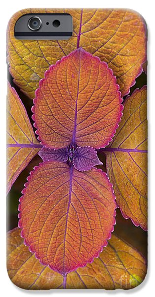 Nature Abstracts iPhone Cases - Coleus Campfire iPhone Case by Tim Gainey