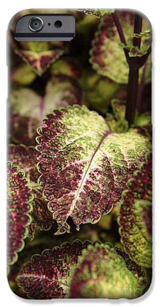 Recently Sold -  - Prescott iPhone Cases - Coleus plant iPhone Case by Erin Paul Donovan