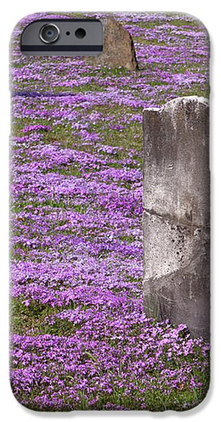Colonial Tombstones Amidst Graveyard Phlox iPhone Case by John Stephens