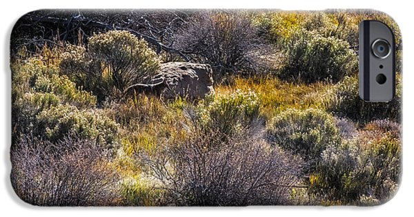Coyote Art iPhone Cases - Colorado Coyote iPhone Case by Paul Freidlund