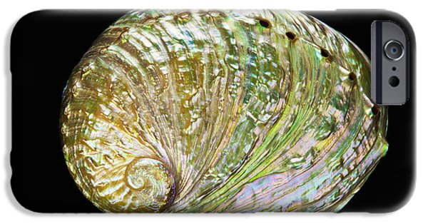Abalones iPhone Cases - Colorful Abalone Shell iPhone Case by Bill Brennan - Printscapes
