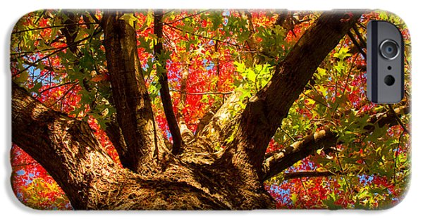 Stock Images iPhone Cases - Colorful Autumn Abstract iPhone Case by James BO  Insogna