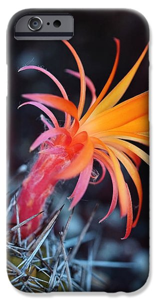 Colorful Cactus Flower iPhone Case by Rona Black