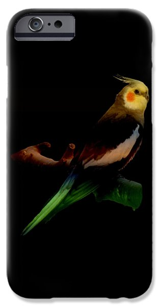 Birds iPhone Cases - Colorful Cockatiel iPhone Case by Nancy Pauling