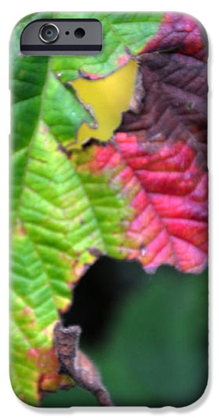 Autumn iPhone Cases - Colorful iPhone Case by Damijana Cermelj