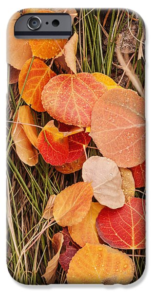 Ground Level iPhone Cases - Colorful Fallen aspen leaves during autumn iPhone Case by Vishwanath Bhat