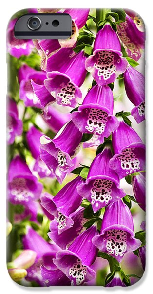 Foxglove Flowers Photographs iPhone Cases - Colorful Foxglove Flowers iPhone Case by Christina Rollo