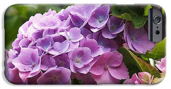 Flora iPhone Cases - Colorful Hydrangea Blossoms iPhone Case by Rona Black