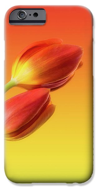 Minimalism iPhone Cases - Colorful Tulips iPhone Case by Wim Lanclus
