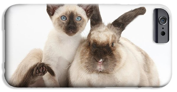 Nature Shot iPhone Cases - Colorpoint Rabbit And Siamese Kitten iPhone Case by Mark Taylor