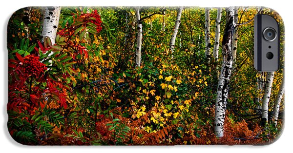 Autumn iPhone Cases - Colors on McClure Pass iPhone Case by Ken Smith